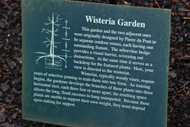 The placard explanation posted in the Wisteria Garden. The arborvitae hedge does indeed provide a visual barrier to feature the wisteria.