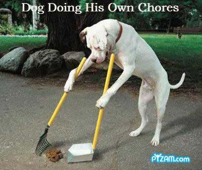 dog pics funny