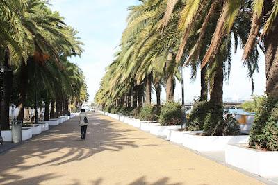 Palms in El Puerto de Santamaría