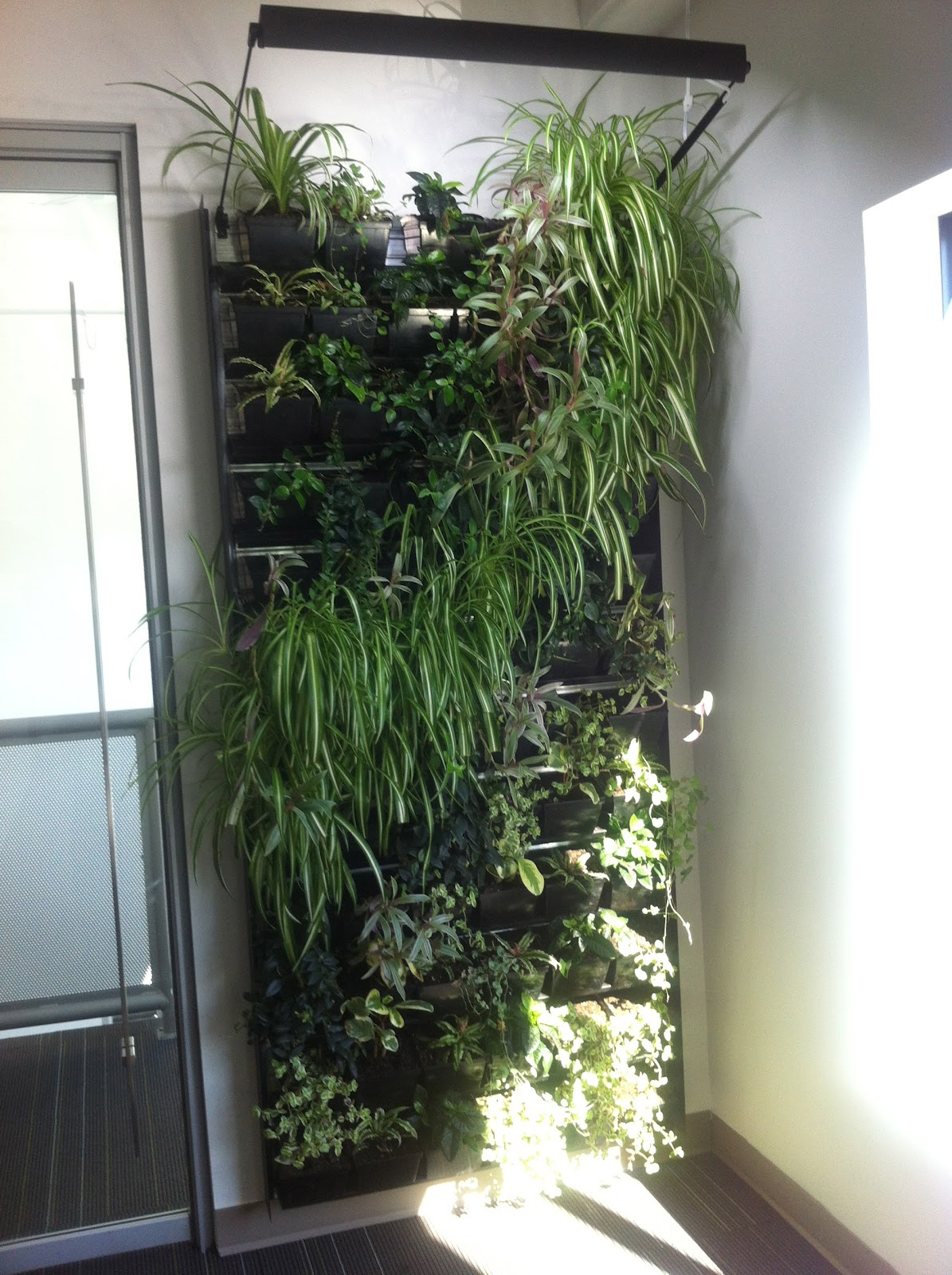 Tiffany munsey september 2012 Indoor living wall herb garden