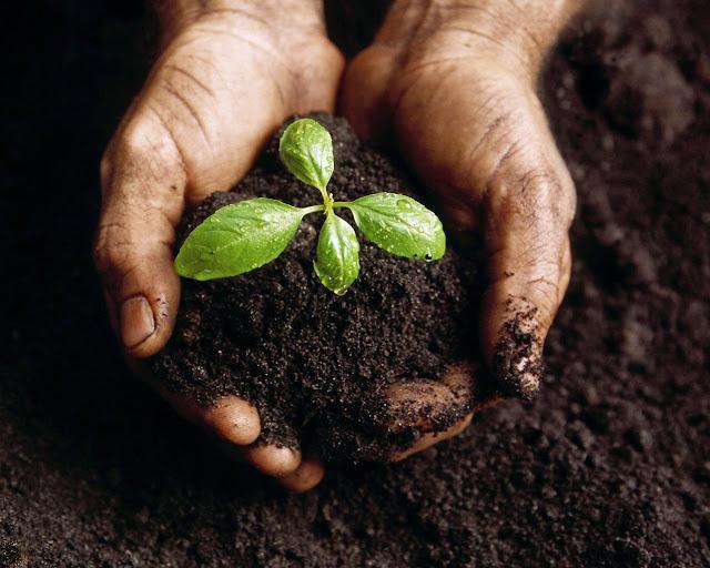 E preciso semear a terra com amor para colhermos os deliciosos frutos da felicidade