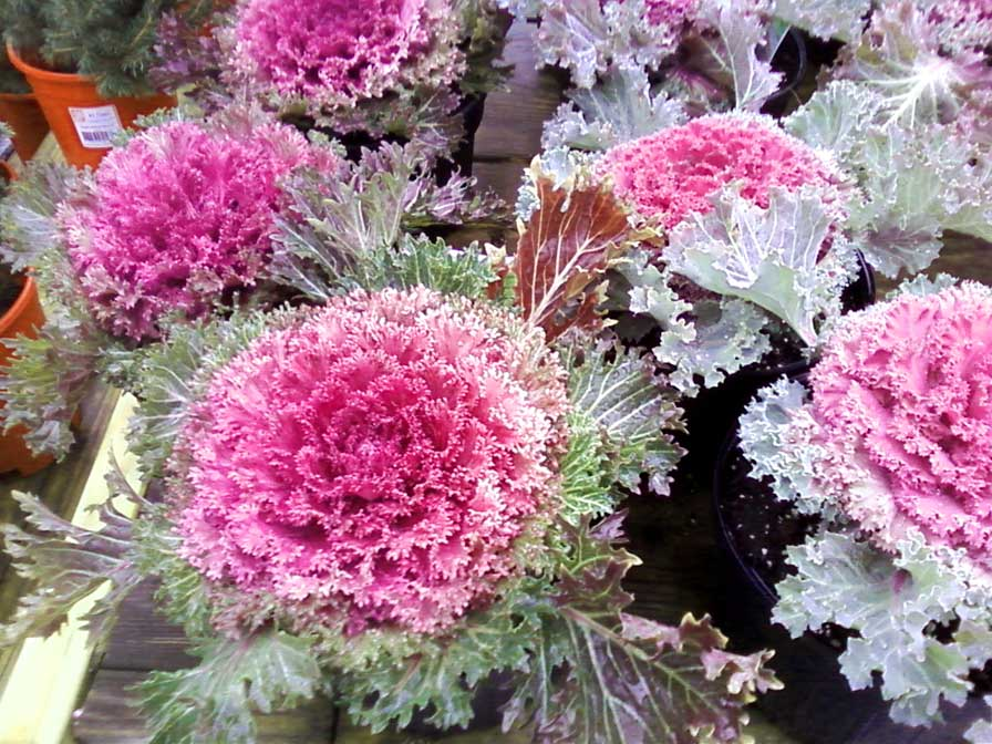 two sisters gardening use hardy winter plants for color