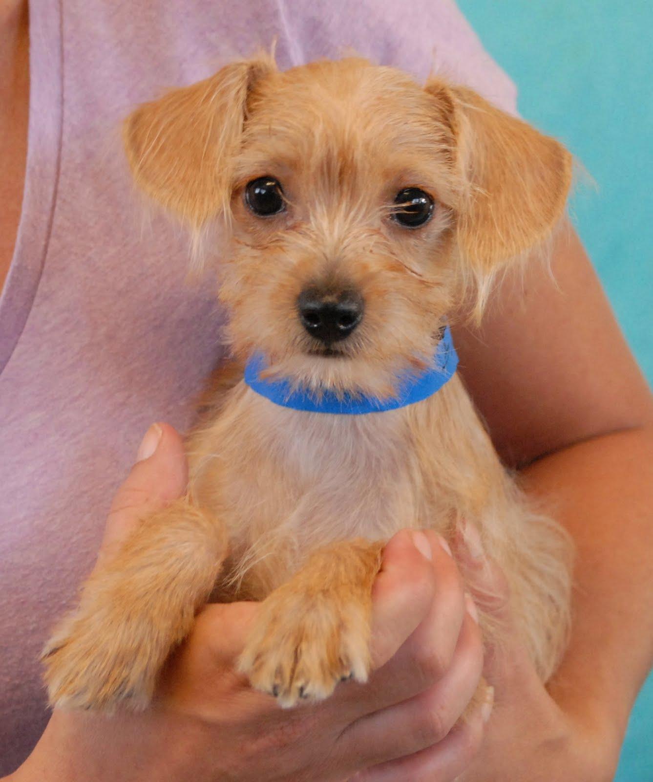 Adoption: Nevada SPCA Animal Rescue: The Brady Bunch Puppies Debut