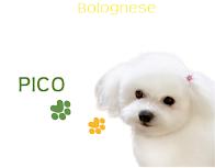 picoのプロフィール