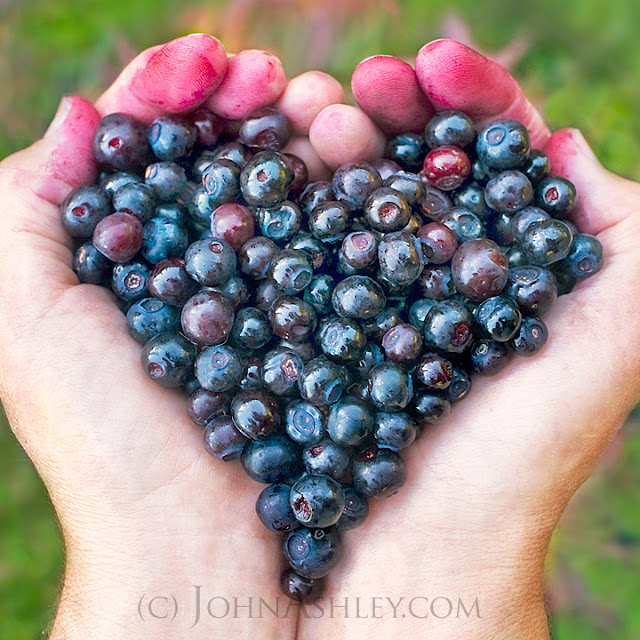 Huckleberry Heart (c) John Ashley
