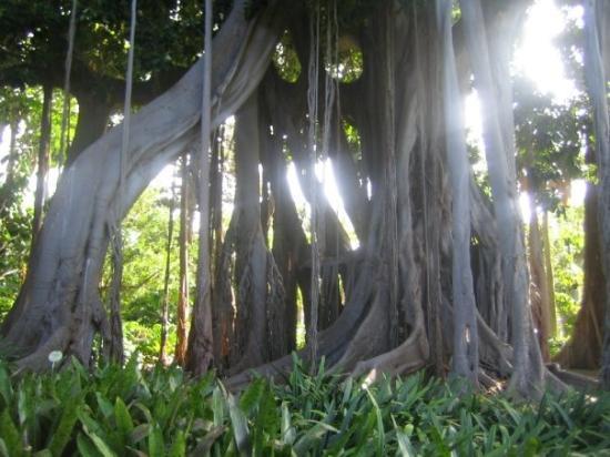 Canarias en el siglo 21 llueve - Botanical garden puerto de la cruz ...