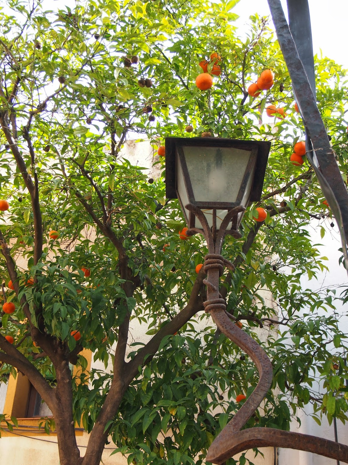 orange trees and lamps