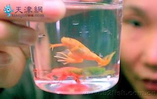 Hanya di China Dijual Katak-Katak Hidup Dengan Warna-Warni Buatan - www.iniunik.web.id