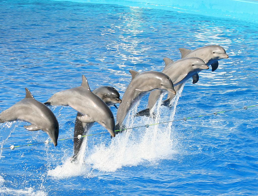 Imagenes De Los Delfines