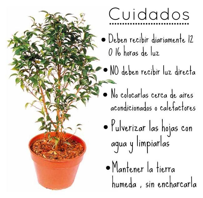 Como cuidar las plantas para colorear imagui for Como cuidar las plantas