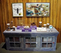 Insect Discovery Station