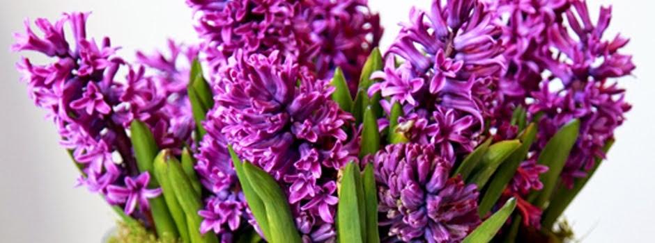 Vida Flores