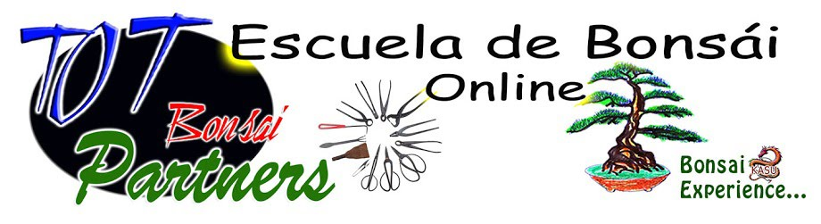 ESCUELA DE BONSÁI