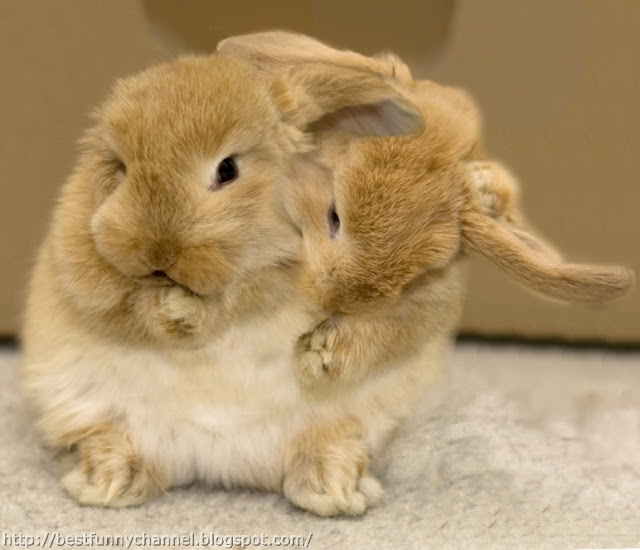 Two bunnies.