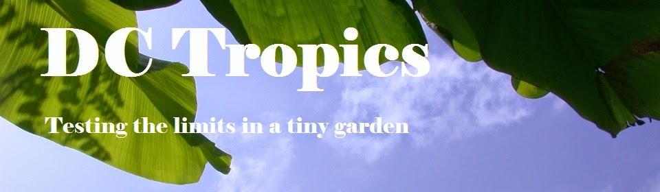 DC Tropics