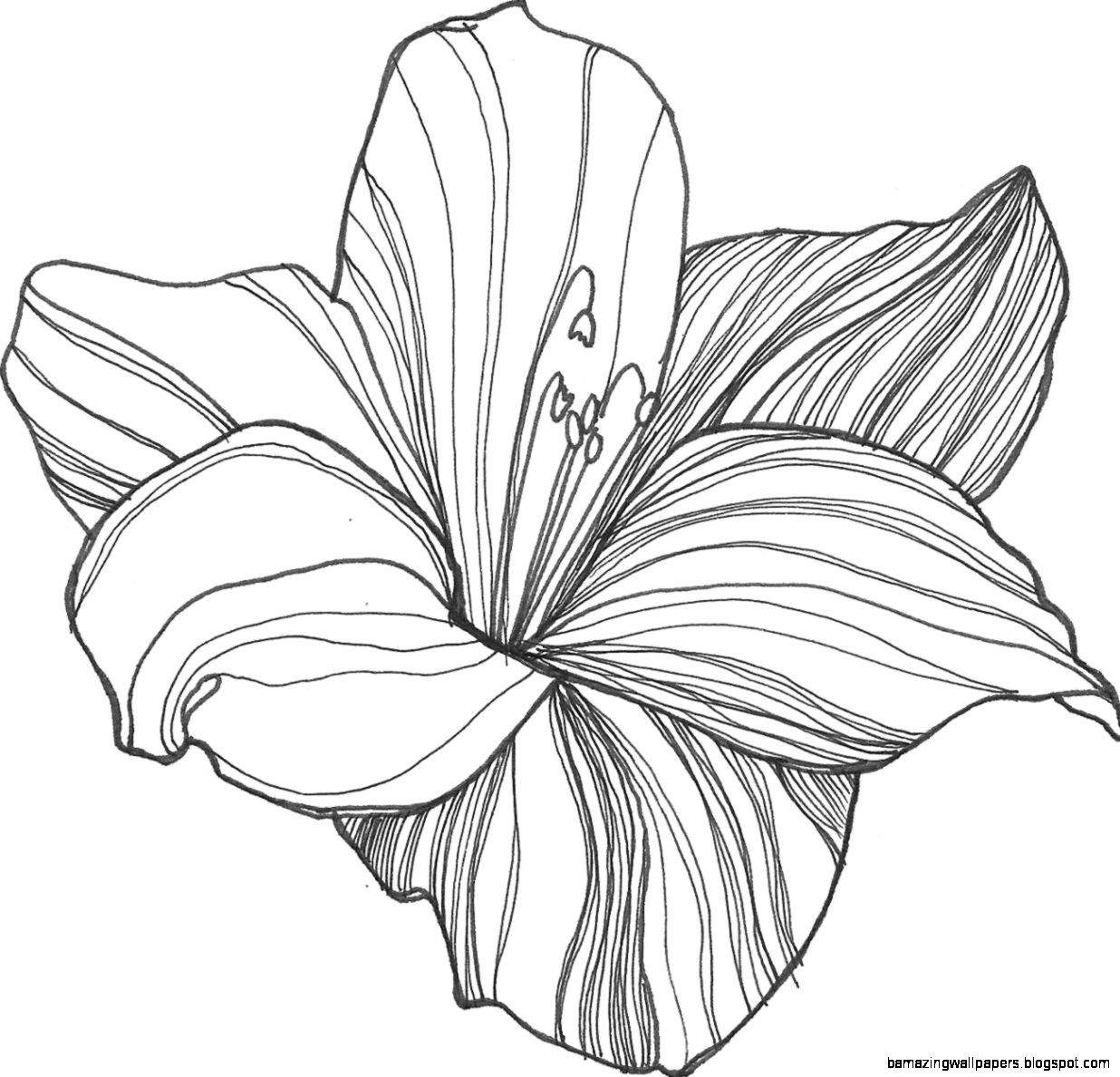 Lotus flower drawing sketch amazing wallpapers view original size izmirmasajfo