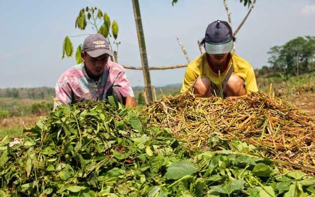 Prospek Cerah Bisnis Pupuk Organik