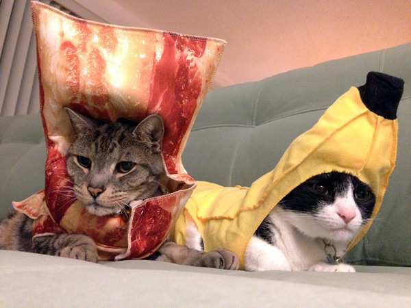 We are cute enough to eat! & Your Daily Cute: Two Cats Tuesday: Pimp and Moou0027s Halloween Costumes!
