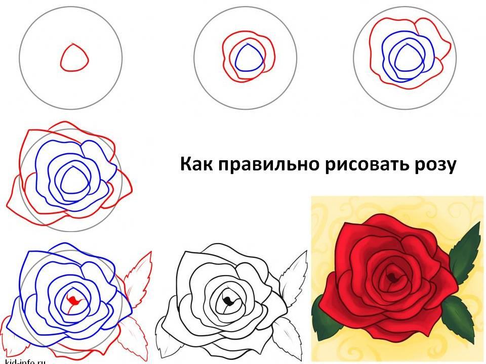 Рисование поэтапно роза