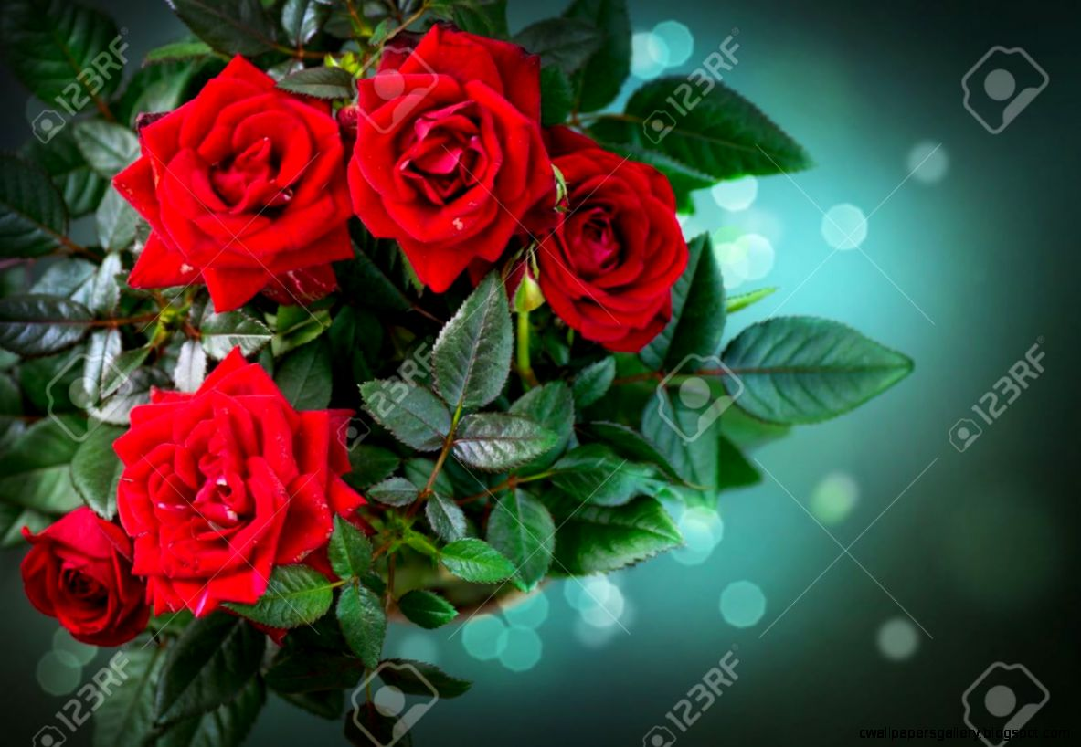 Roses Flowers Rose Stock Photo Picture And Royalty Free Image