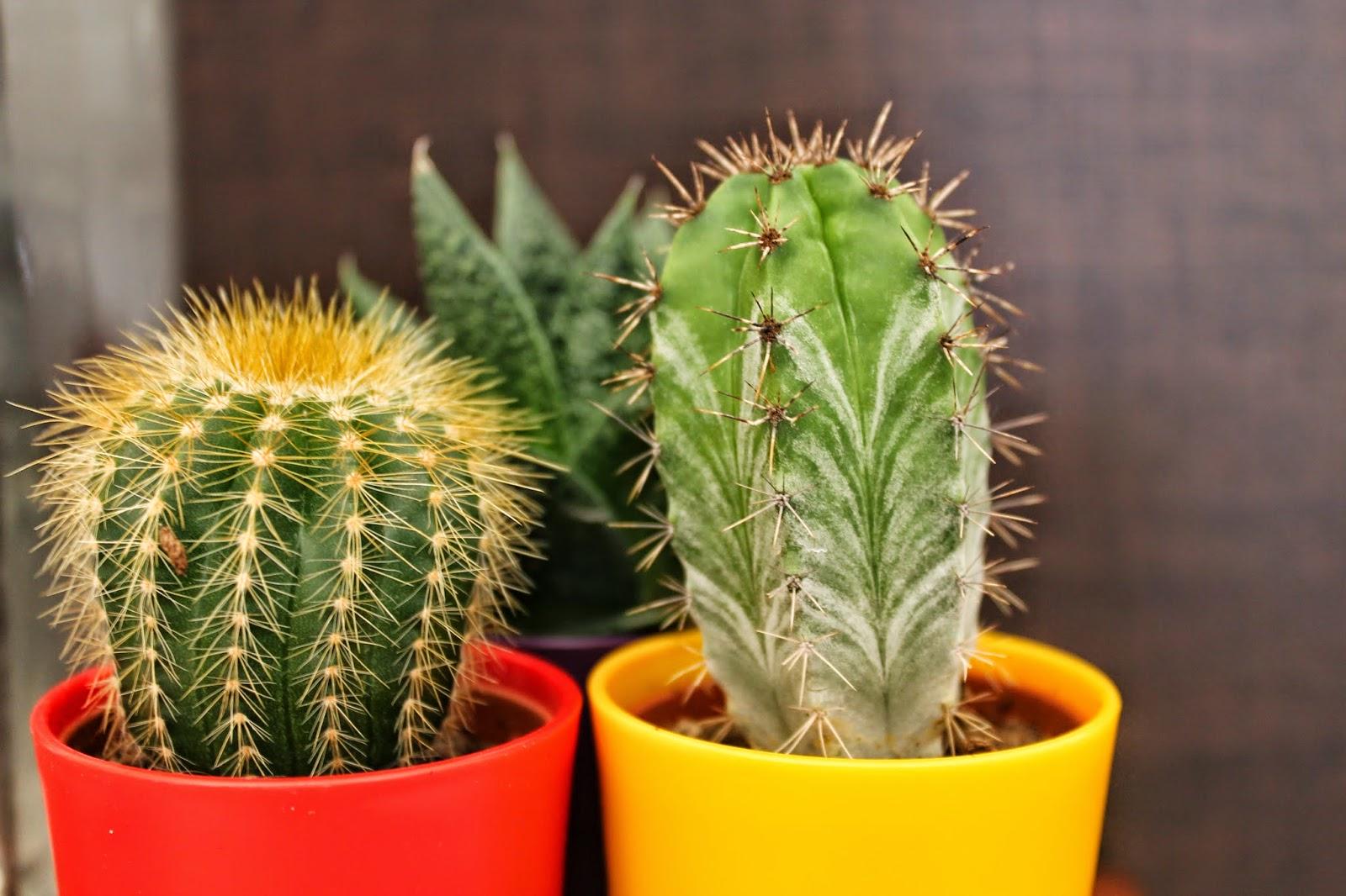 asda-plant