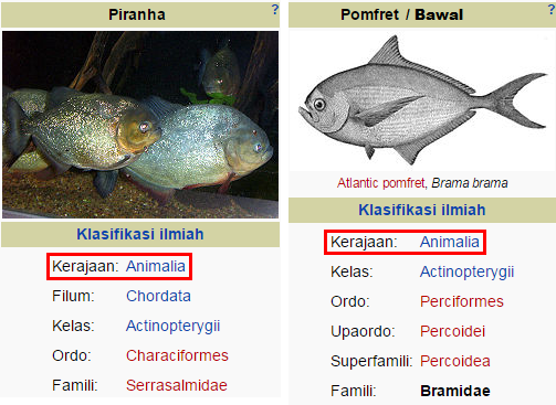 perbedaan piranha dan bawal