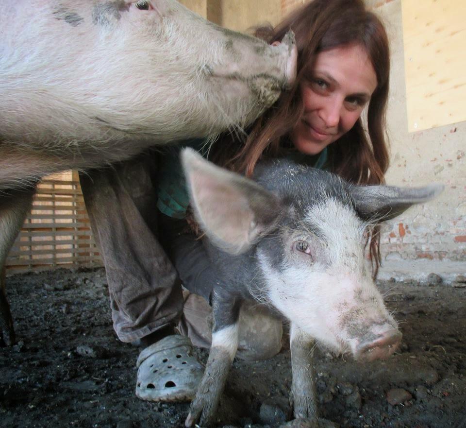 Ilcovodijack 2766 il paradiso dei maiali - La locanda degli amori diversi ...