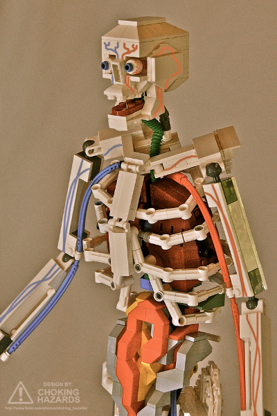 Choking Hazards: Lego Anatomy (torso)