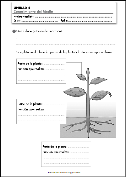 http://www.primerodecarlos.com/TERCERO_PRIMARIA/noviembre/Unidad4/fichas/cono/cono1.pdf