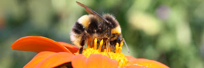 Bee on Flower - New Forest Community Wildlife Plans
