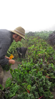 Fable Farm Vermont WWOOF usa