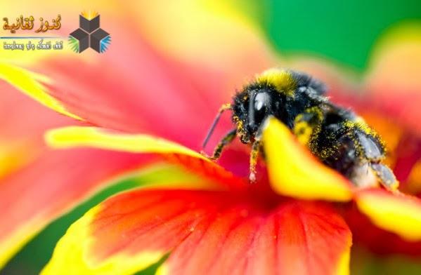 النحل لا يرى اللون الأحمر