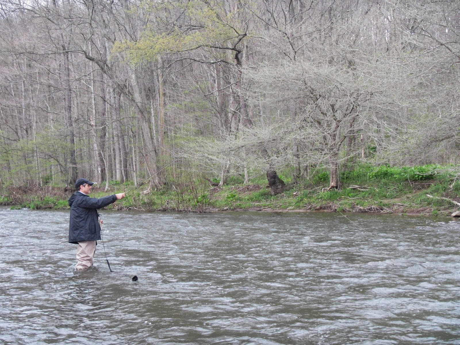 Western maryland fly fishing fishing between the rain for Md trout fishing