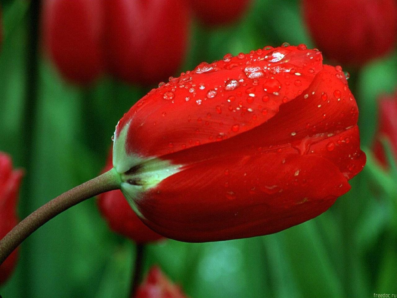 http://3.bp.blogspot.com/-ZlT05a6qWko/UJzUKHdCzLI/AAAAAAAAA-s/fyfUXChipu0/s1600/mh+studio+fort+abbas+mubashir+hassan+rose+03452004005+0632510005+news+pao+paper+tv+pic+pakistan+(27).jpg