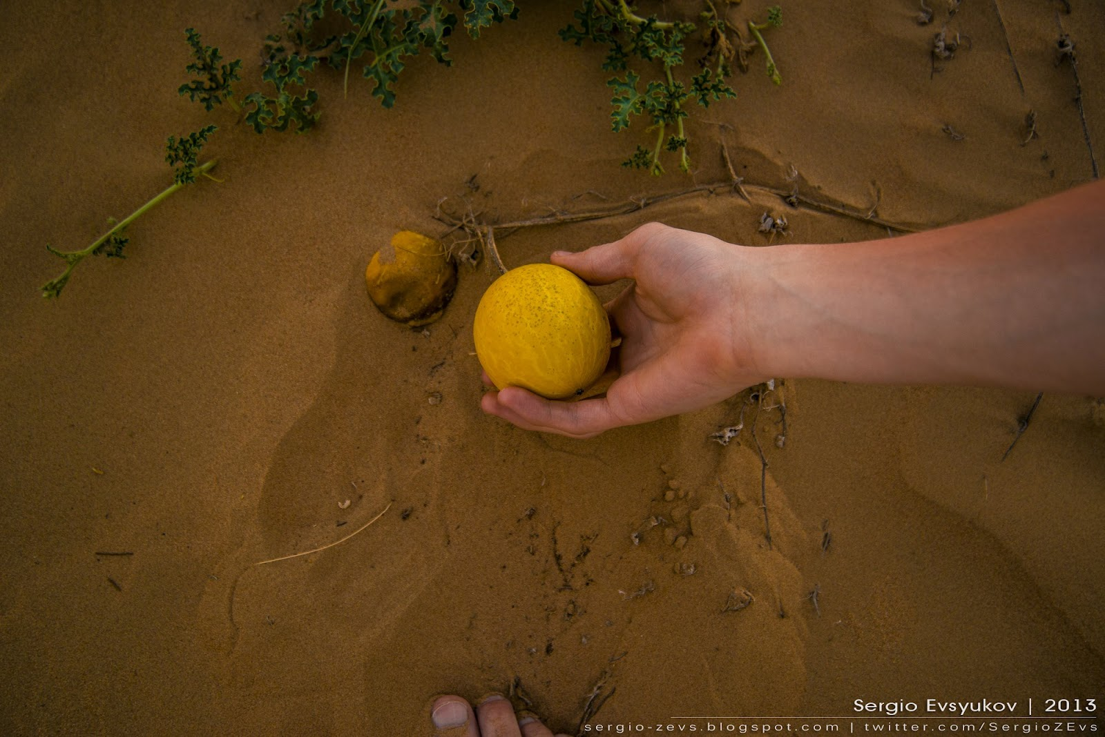 Melon, Desert, UAE, Sand, ОАЭ, Сафари