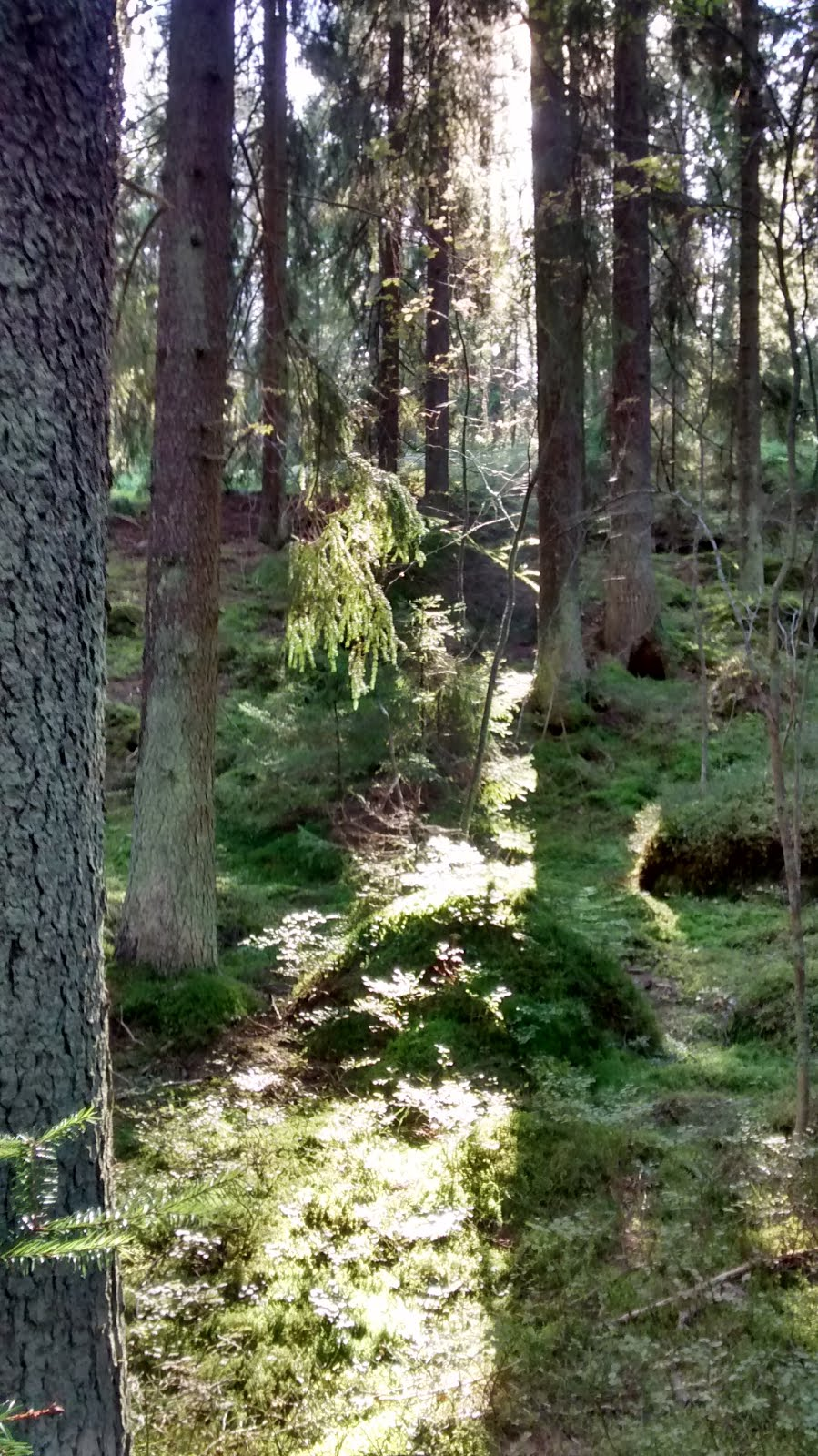 Light shining into the Finnish forest