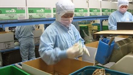 Đi xuất khẩu lao động Nhật không đúng chỗ