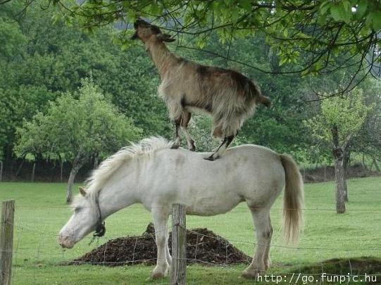 amazing animals pics caught in cam, funnies animals images