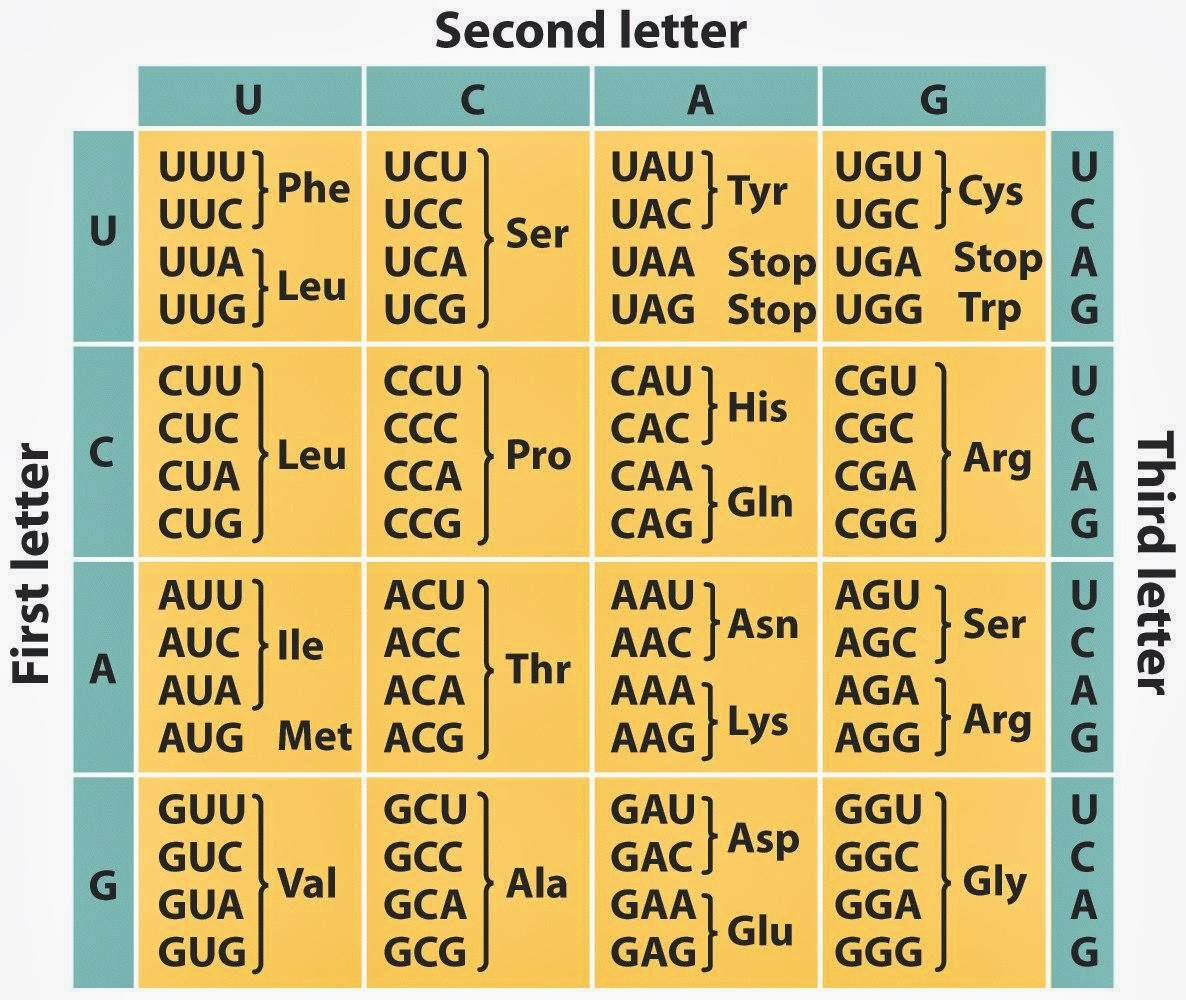 wonderful Protein Codon Table Part - 4: genetic code table