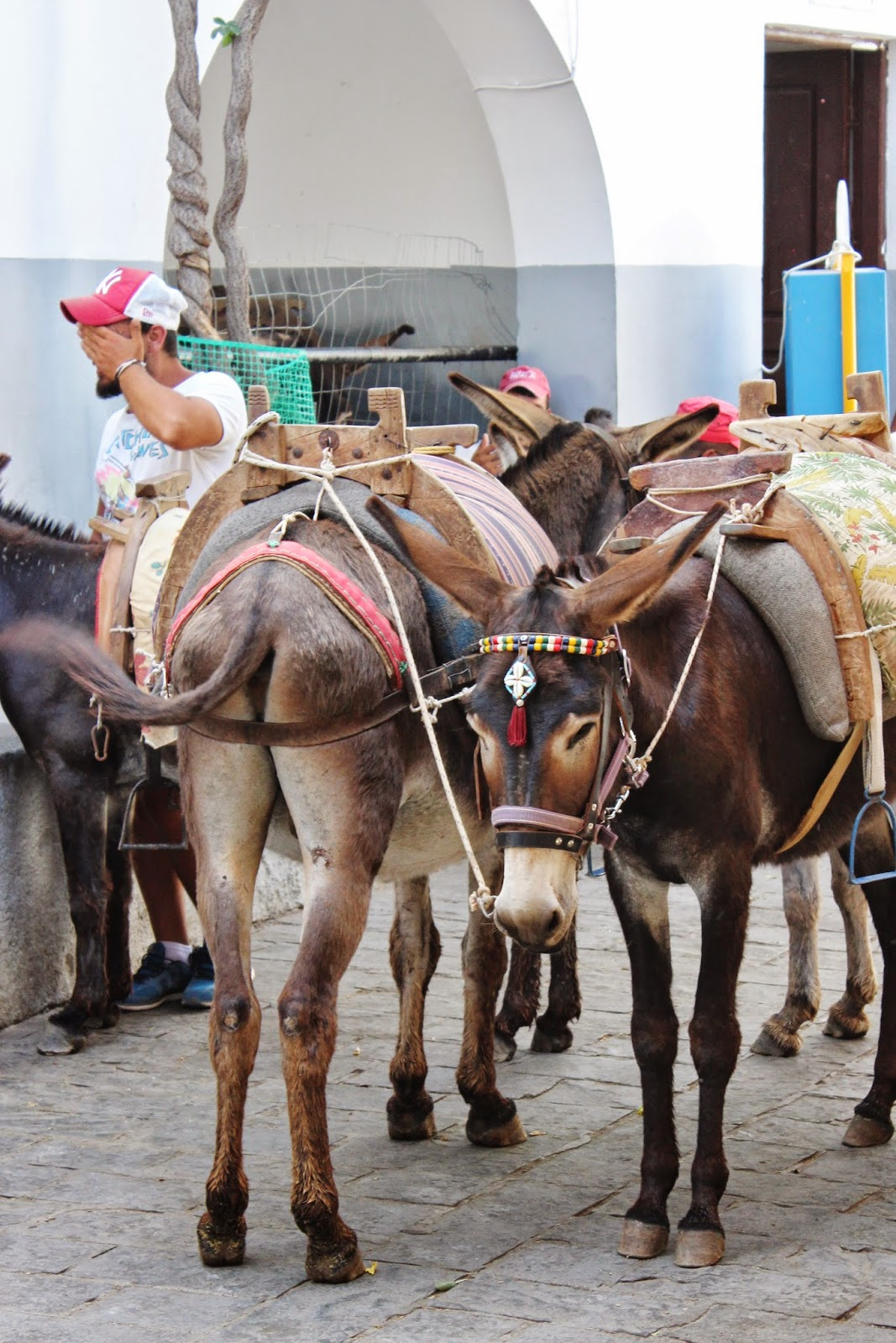 Donkeys in Lindos, Rhodes