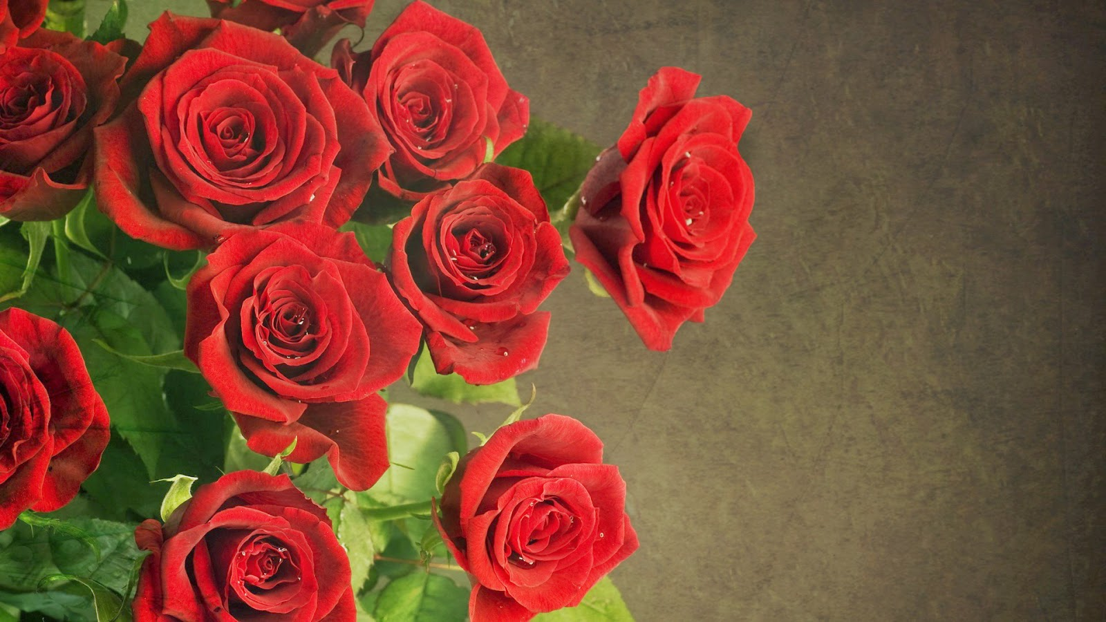bunch of red roses wallpapers driverlayer search engine