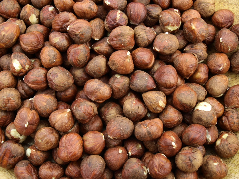 types of wild nuts   bing images