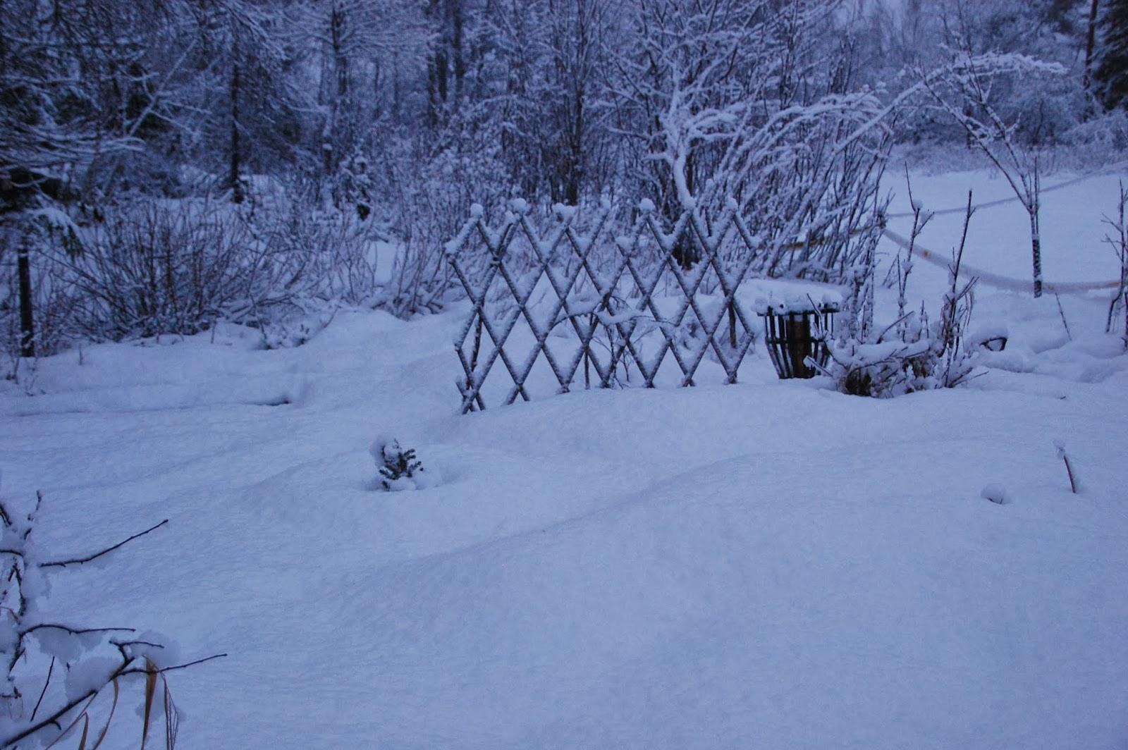 Svanå trädgård: januari 2014