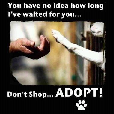 Don't Shop! Adopt!