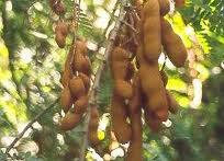 obat tradisional menghilangkan bekas jerawat - globelensa.blogspot.com