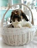 RIP Little Bunny Fufu