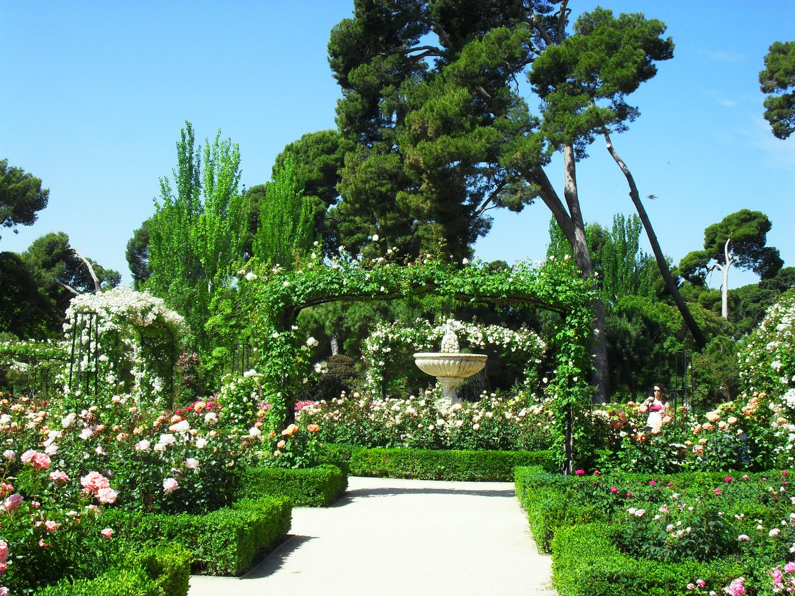 Arte y jardiner a rosaleda jard n del retiro en madrid for Paginas de jardineria
