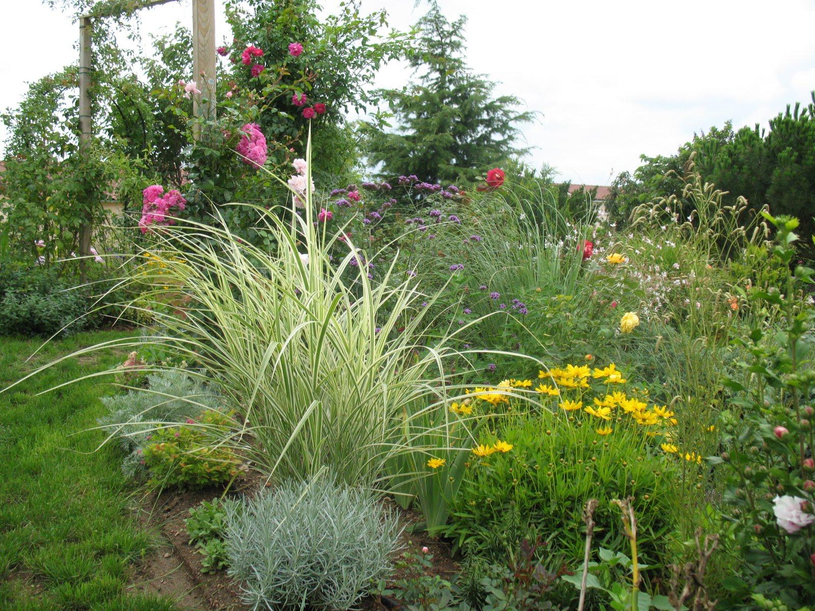 Roses du jardin ch neland fleurs du jardin for Fleurs du jardin vivaces