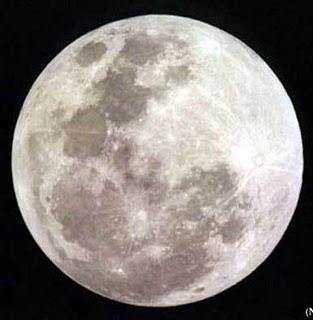 bulan maskolis