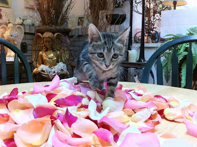 Sophie cat walking through rose petals - Stein Your Florist Co.